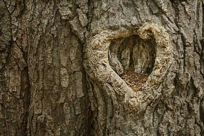 Photograph - Lovely Home - Heart - Tree by Nikolyn McDonald