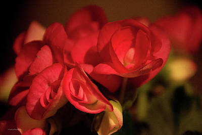 Photograph - Lovely In Red by Edward Congdon