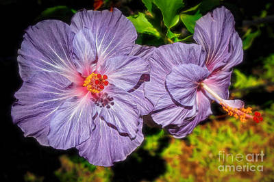 Photograph - Lovely Lavender Hibiscus by Sue Melvin