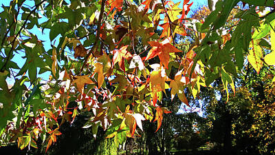Photograph - Lovely Leaves by Nareeta Martin