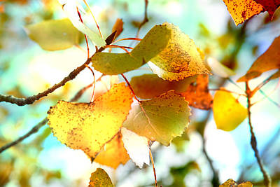 Heart-shaped Lights Photograph - Lovely Leaves by Toni Hopper