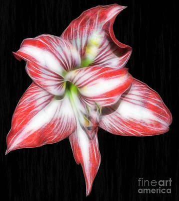 Photograph - Lovely Lily by D Hackett