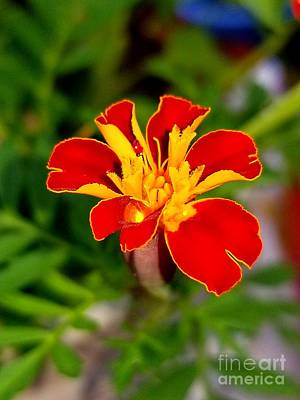 Photograph - Lovely Little Flower by Michael Graham