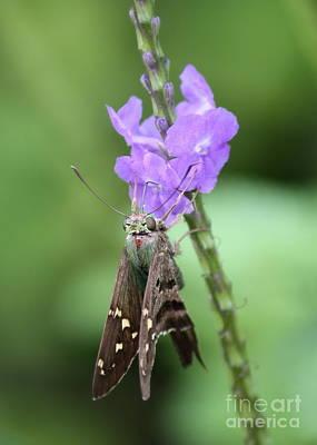 Bug Eyes Photograph - Lovely Moth On Dainty Flower by Carol Groenen