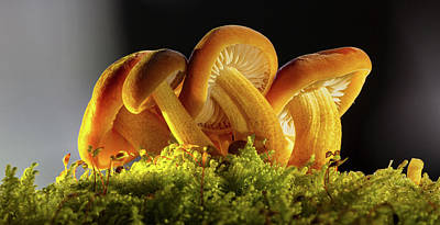 Photograph - Lovely Mushrooms by Andreas Dobeli