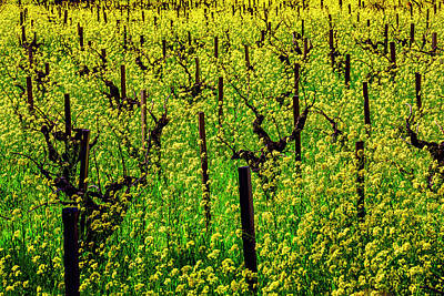 Sonoma County Vineyards Photograph - Lovely Mustard Grass by Garry Gay