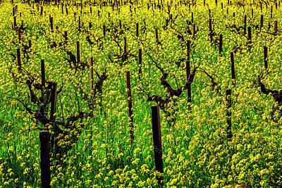 Lovely Mustard Grass Art Print by Garry Gay
