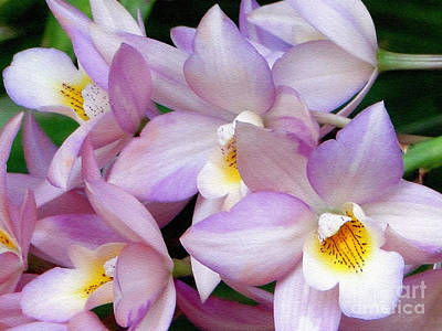 Photograph - Lovely Orchid Family by Sue Melvin