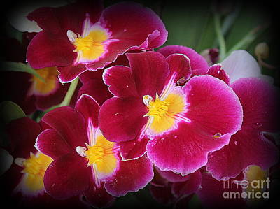 Photograph - Lovely Orchids In Red And Gold by Dora Sofia Caputo Photographic Art and Design