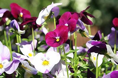 Photograph - Lovely Pansies  by Gabriella Weninger - David