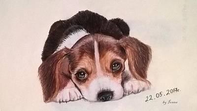 Drawing - Lovely Pet by Ivana Koleva