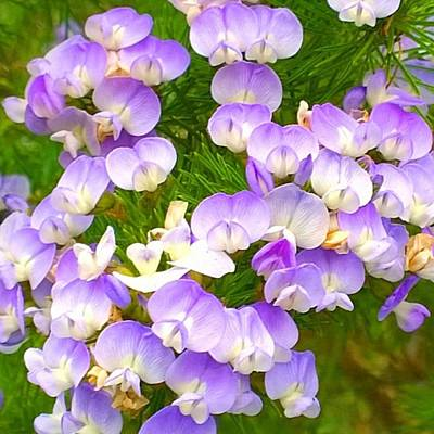 Home Photograph - Lovely #purple #flowers Beg Your by Shari Warren