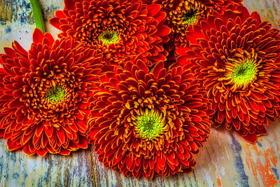 Photograph - Lovely Red Gerbera Dasies by Garry Gay