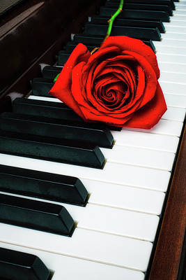 Piano Photograph - Lovely Rose On Piano Keys by Garry Gay