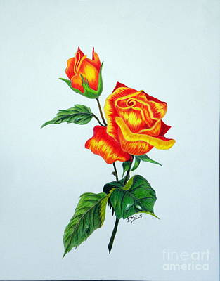 Drawing - Lovely Rose by Terri Mills