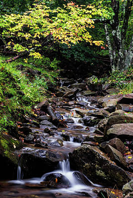Photograph - Lovely Stream In Shenandoah Np by Vishwanath Bhat