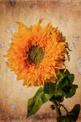 Photograph - Lovely Textured Sunflower by Garry Gay