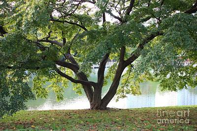 Photograph - Lovely Tokyo Tree With Pond by Carol Groenen