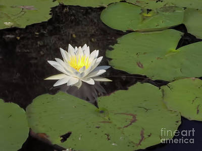 Photograph - Lovely Water Lily by D Hackett
