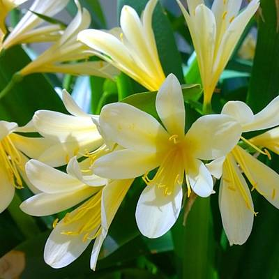 Home Photograph - Lovely White And Yellow #flowers by Shari Warren