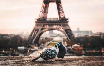 Cute Bird Photograph - Lover Doves In Paris by Fbmovercrafts
