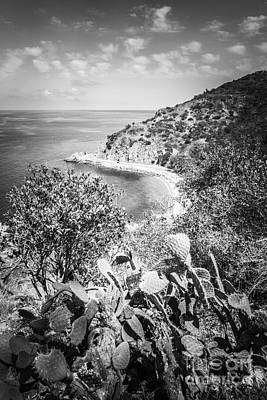 Black Cactus Photograph - Lover's Cove Catalina Island Black And White Photo by Paul Velgos