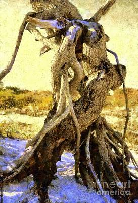 Tree Roots Photograph - Lovers Dance - Golden Shores by Janine Riley