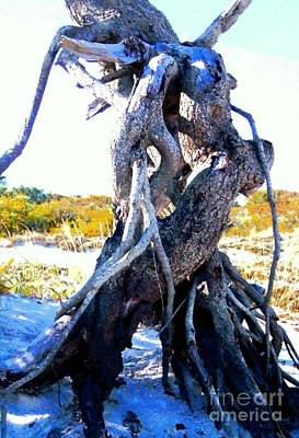 Lovers Entwined Beach Driftwood Art Print by Janine Riley