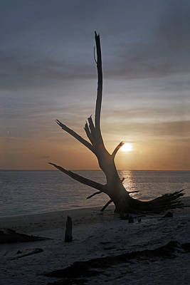 Evening Photograph - Lover's Key Dead Tree By Darrell Hutto by J Darrell Hutto