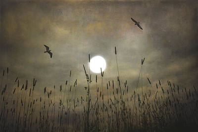 Lovers Moon Art Print by Tom York Images