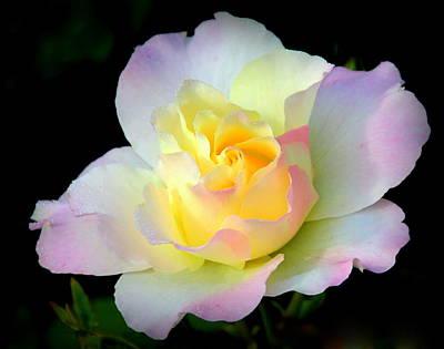 Photograph - Loves Bounty In A Rose by Rosanne Jordan