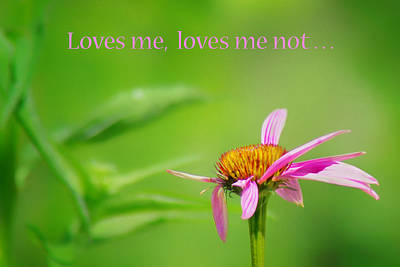 Photograph - Loves Me - Loves Me Not - Coneflower by Nikolyn McDonald