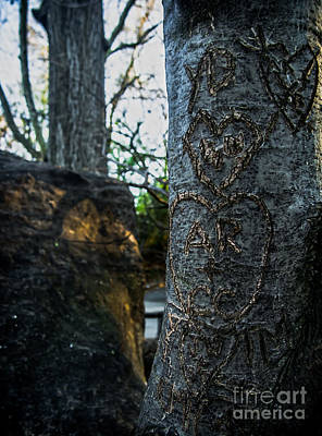Love's Scars In Central Park Art Print by James Aiken