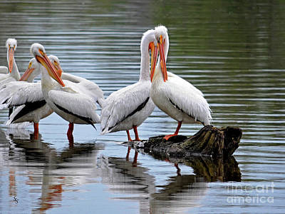 Photograph - Lovey Dovey Pelicans by Sue Stefanowicz
