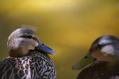 Photograph - Lovey Duck by Florene Welebny