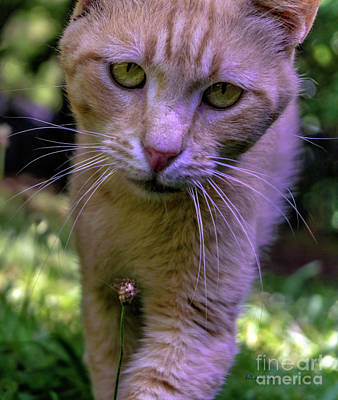 Photograph - Lovey Feral Cat Portrait 0369a by Ricardos Creations