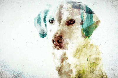 Photograph - Loving Dog by Andrea Anderegg