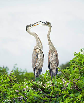 Photograph - Loving Herons by Fran Gallogly