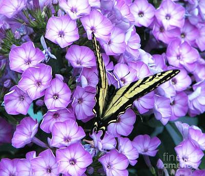 Photograph - Loving Phlox 6 by Judyann Matthews