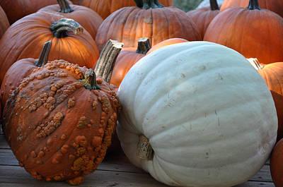 Photograph - Loving Pumpkins by Teresa Blanton