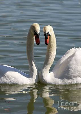 Photograph - Loving Swans by Carol Groenen