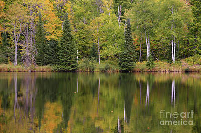 Photograph - Loving That Autumn Song by Rachel Cohen