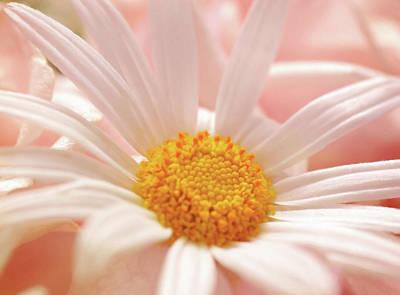 Botanicals Mixed Media - Lovingly Picked For You by Georgiana Romanovna