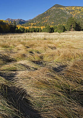 Photograph - Lockett Meadow Grasses by Tom Daniel