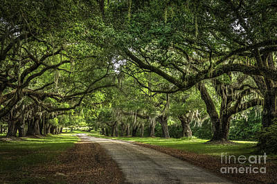 Low Country Live Oak Art Print