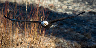 Photograph - Low Fly By  by Shari Sommerfeld