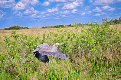 Photograph - Low Flying Heron by Judy Kay