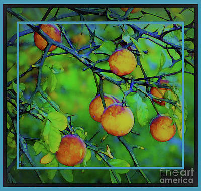 Photograph - Low Hanging Fruit by Shirley Moravec