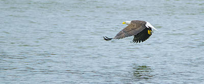 Photograph - Low Level With Fish by Jeff at JSJ Photography