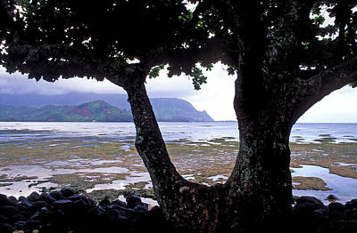 Low Tide And The Tree Art Print